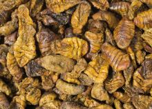 JR Farm Larvy bource morušového 40 g